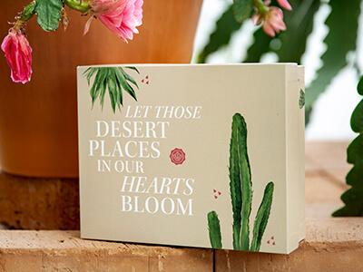 Juni - Desert Dreams