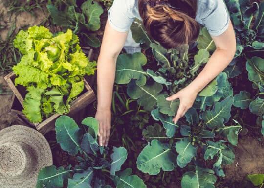 Une femme qui cultive des plantes sur une ferme.