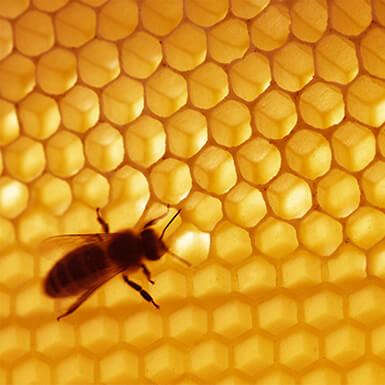 about beeswax