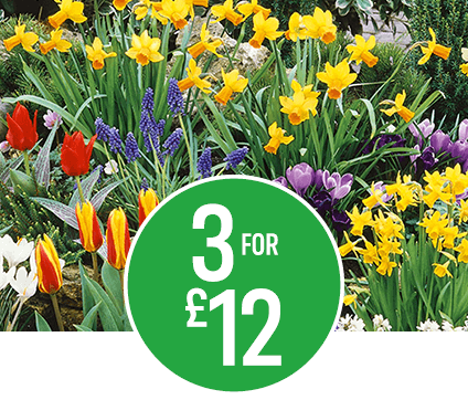 Get 3 for £12 on £4.45 Outdoor Plants