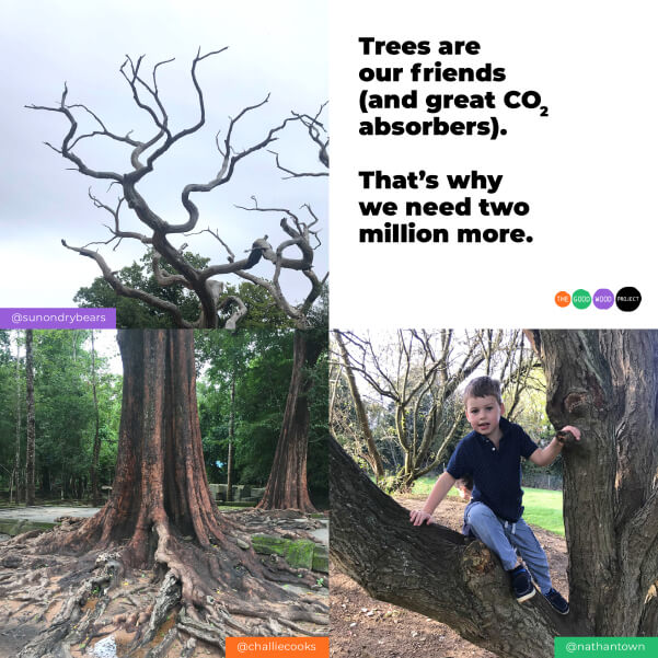 Trees are our friends (and great CO2 absorbers). That's why we need two million more.